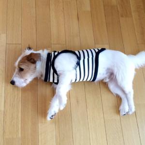 犬のボーダーTシャツのキット